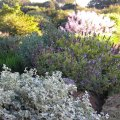 Garden sunset 07 2012