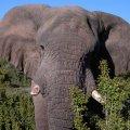 Elephant Kwandwe