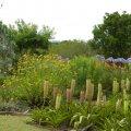 Low cost garden