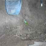 Plant in Van