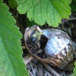 Plant in Shell