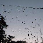Community spiders