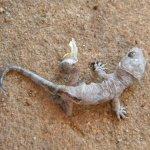 Gecko shedding