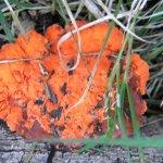 Orange sponge