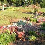 Succulent species