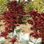 Succulents contrast