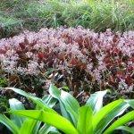 Succulents part shade